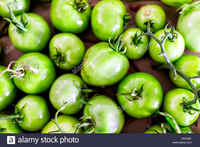 Flat-top-above-view-down-of-many-small-unripe-green-tomatoes-on-vine-m1e28k